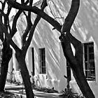 Trees and windows by Linda Sparks