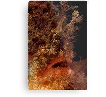 Tasselled Anglerfish Metal Print