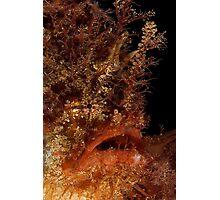 Tasselled Anglerfish Photographic Print