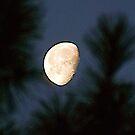 Moonlight Through the Georgia Pines by Kent Burton