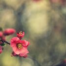 blossoms, painterly by narelle sartain