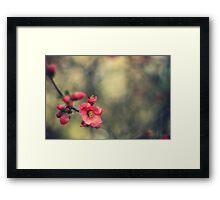 blossoms, painterly Framed Print