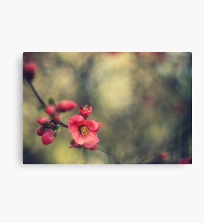 blossoms, painterly Canvas Print