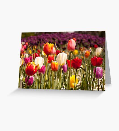 Spring Flowers in Bloom Greeting Card