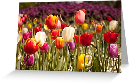 Spring Flowers in Bloom by fab2can
