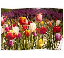 Spring Flowers in Bloom Poster
