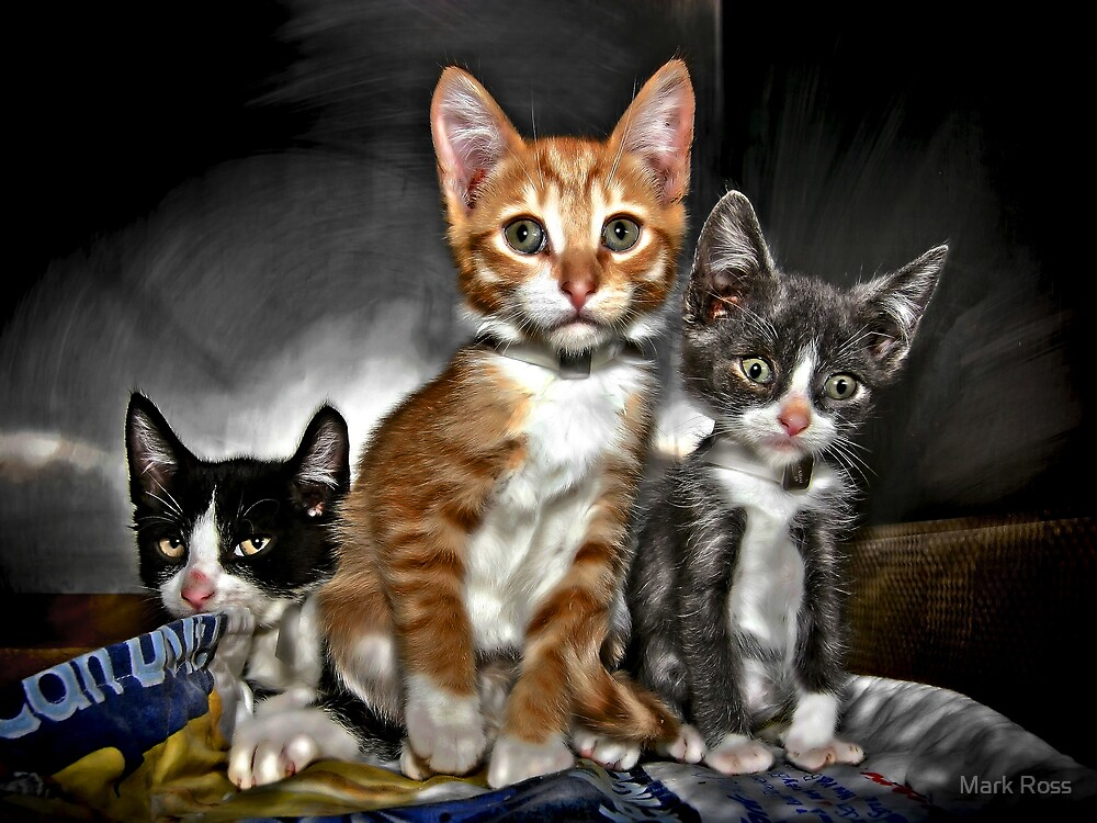 Creamsicle, Grayson and Melvin by Mark Ross