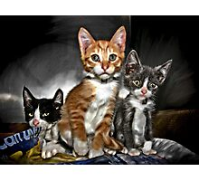 Creamsicle, Grayson and Melvin Photographic Print