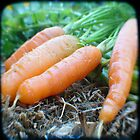 Marijka&#x27;s carrots by Northcote Community  Gardens