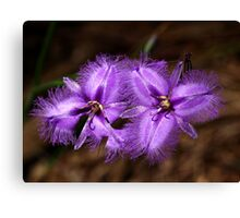Purple Fringe Lily Duo - Mt Cannibal, Victoria, Australia Canvas Print