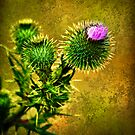 Flowering Thistle by Tony Steinberg