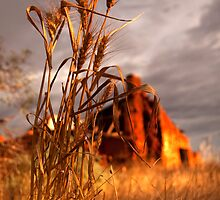 Golden Sunlight by Pene Stevens