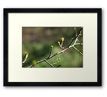 Buds on the Branch Framed Print