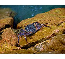 crawling on tiptoes Photographic Print
