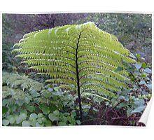 Wild fern Poster