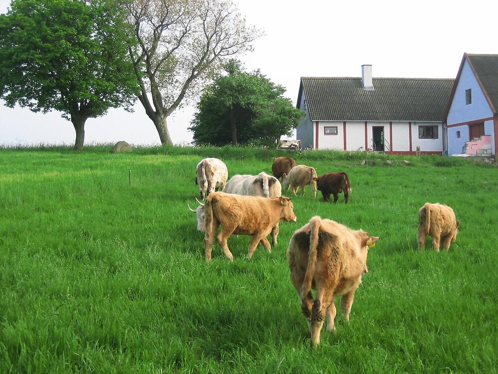 Cows on parade by landsgrav