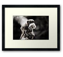 Emperor tamarin... Framed Print