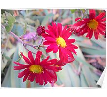 Wonderful flowers Poster