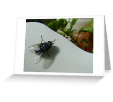 housefly (Musca domestica), on jug in garden Greeting Card