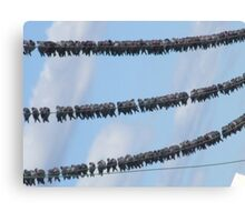 Birds on wire Canvas Print