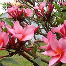 Flores by AluisioRibeiro
