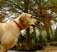 Concentrating Canine by ks1484