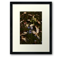 Forget me, Not Framed Print