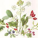 Winter Berries by Maureen Sparling