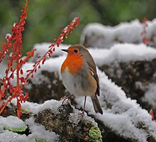 Christmas Robin by Dave9t