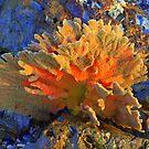 Sea sponge  by Doug Cliff