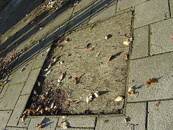 autumn quadrilateral (pavement in Fall, Burntisland) by armadillozenith