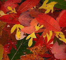 Leaves, leaves, leaves by Karen Kaleta