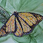 Butterfly Study by JRobinWhitley