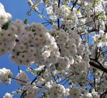 Blossoms of Spring Sticker