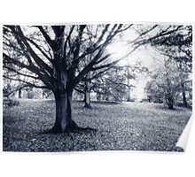 Autumn in Mote Park Poster