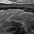 Reflections in a bog pool by Rory Trappe