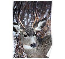 Buck Shot Poster