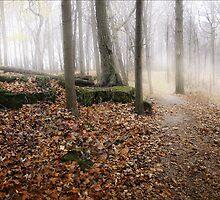 Woodland Path - Hamilton Ontario Canada by David Buckle