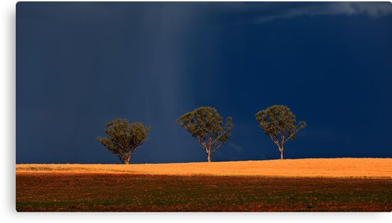 Trees in field with storm building up by Manfred Belau