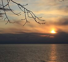 Lake Ontario Sunset by Alyce Taylor