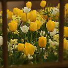 Framed flowers by Lindie Allen