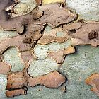 Spanish Bark 2 by Haydee  Yordan