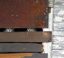 Who Goes There-two cats in a barn by AmandaFerryman