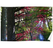 Trout Brook Road Stream - Arundel, Maine Poster