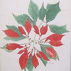 Poinsettias for Christmas 1965 by James Lewis Hamilton