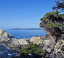 The Pinnacle, Point Lobos State Reserve by Barb White
