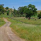 Country Lane by Joe Mortelliti