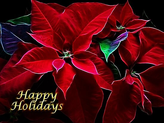 Poinsettia by Sandy Keeton