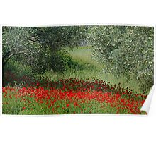 Poppies among the Olives in Turkey Poster