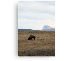 Bison and Chief Mountain Canvas Print